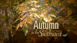 Autumn in the Southwest