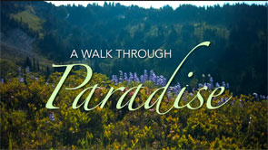 A Walk Through Paradise